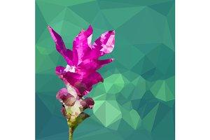 Pink color polygonal siames tulip