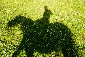 Horse and rider shadow on the lawn
