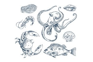 Seafood Sketch Illustration