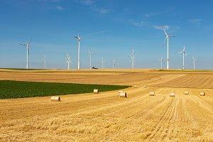 Windturbines in yellow/green feeld