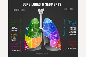 Human lungs infographic