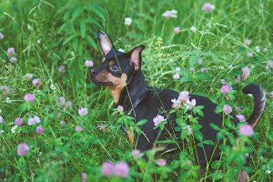 Little dog in the green grass