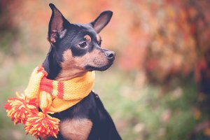 Dog in a scarf in an autumn park.