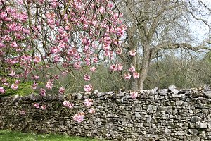 Cherry Branches Stone Wall