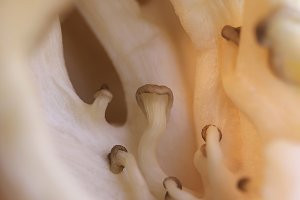 Little oyster mushrooms group textur