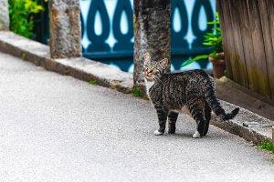 Cat walking along city street