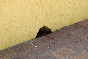 Hole in the wall near the floor. The