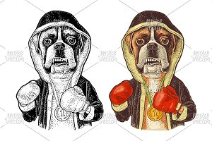 Dog boxer dressed in human in robe