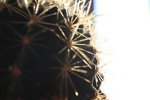 Prickly surface of cactus