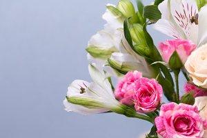 Closeup beautiful flowers in pastel