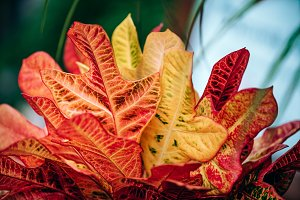 Red Orange and Yellow Leaves