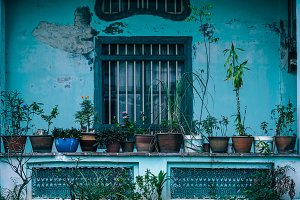 Plants in Pots in Front of Building