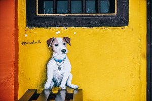 Cute White Dog Street Art