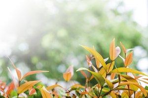 Orange leaves nature background