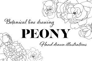 Botanical line drawing - PEONY