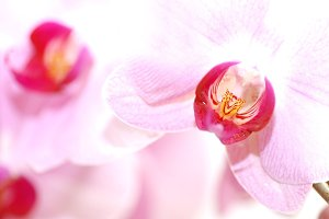 Orchid flowers close up