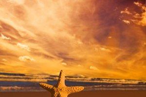 Starfish on summer beach at sunset