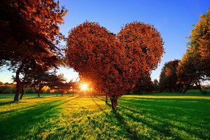 Heart shape tree with red leaves