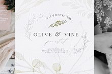Olive Watercolor & Illustrations by  in Illustrations