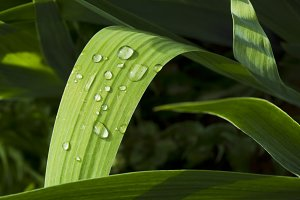 Green grass with raindrops.