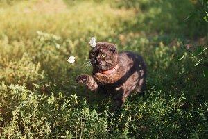 Cat catches butterflies in the garde