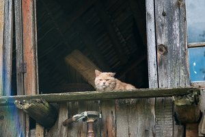 Homeless cat lives in the attic of a