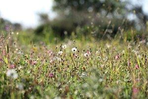 Wild spring, wild flowers.