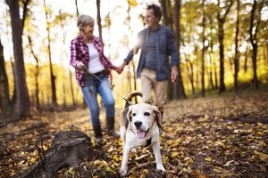 Senior couple with dog on a walk in