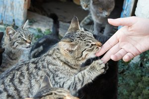 Feeding group of alley cats