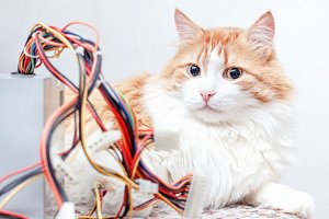 Cat and computer wires