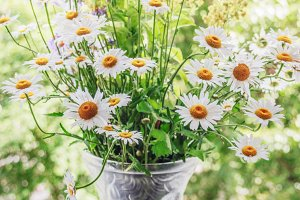 Bouquet of daisies in vase