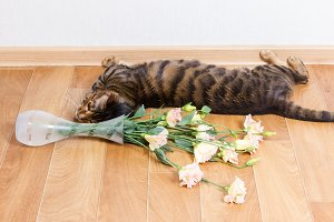 Cat breed toyger dropped glass vase