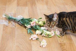 Cat broken vase of flowers