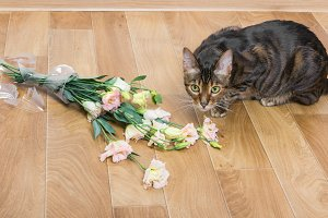 Cat broken vase of flowers