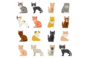 Funny cats in flat style. Isolate on