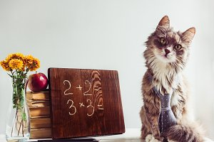 Fluffy kitten, vintage books, red