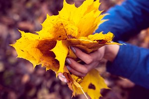 autumn leaves in hands