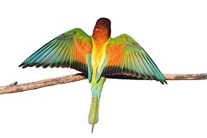 exotic colored bird revealing wings