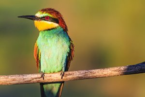 paradise colored bird sitting on a