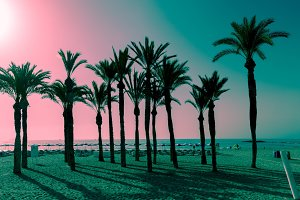 Silhouettes of palms on the beach at