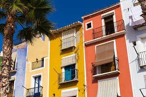 Palm tree and Colorful houses in the