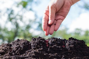 Farmers are planting seeds in soil