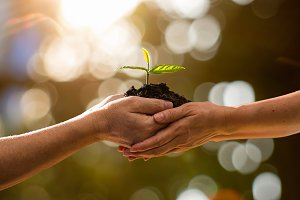 couple hands holding green plant