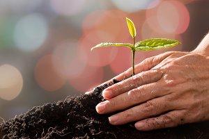 farmers hand holding seedling