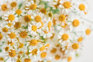 Macro photography of little daisy