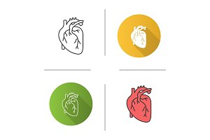 Human heart anatomy icon