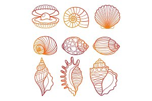 Seashells. Colorful outline seashell