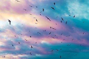 Birds flying.