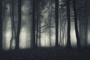 Dark haunted forest at night