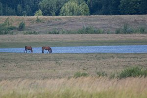 Horse on a background of lake